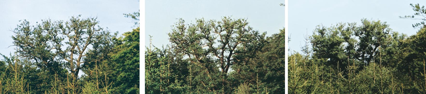 4 Jahren Mykorrhiza